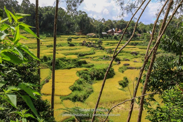 I do not get tired of this landscape of rice fields staggered on a hillside. (Toraja Country, Sulawesi, Indonesia, July 2010)