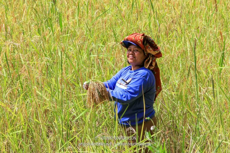 Fun look at this lady working in the sun in the middle of the rice field. (Toraja Country, Sulawesi, Indonesia, July 2010)