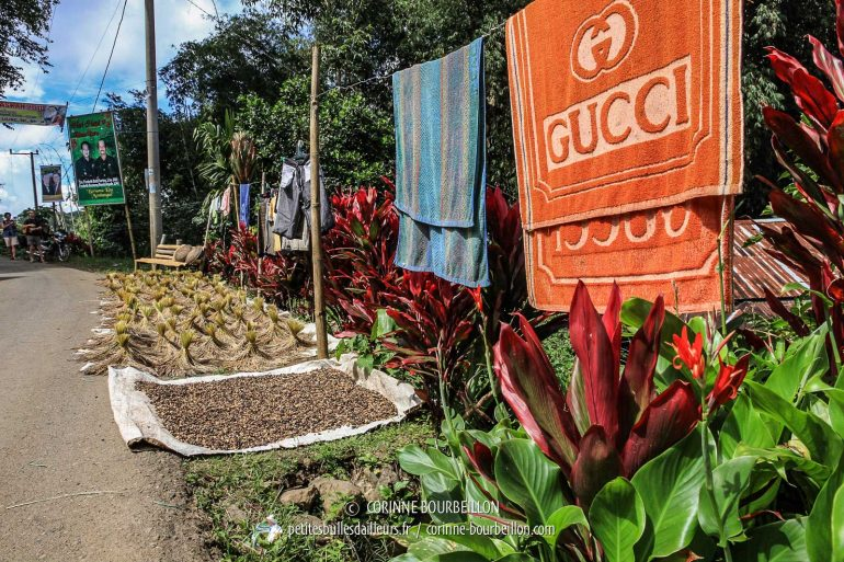 An unusual counterfeit Gucci dries in the sun along the road, with the harvest ... (Toraja Country, Sulawesi, Indonesia, July 2010)