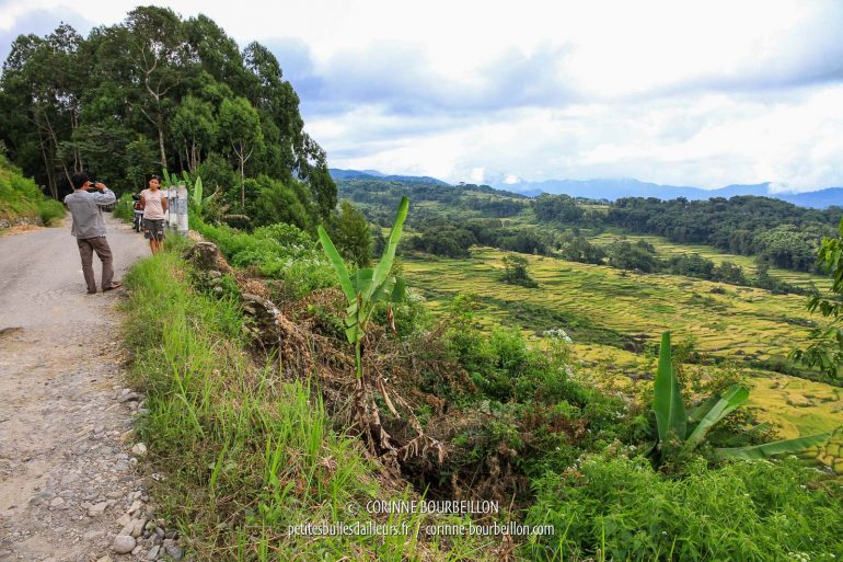 It is THE landscape where to take a picture of his or her sweetheart ... (Toraja Country, Sulawesi, Indonesia, July 2010)