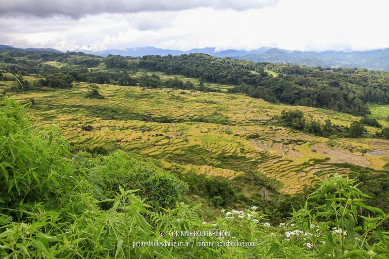 Rice fields as far as the eye can see ... (Toraja Country, Sulawesi, Indonesia, July 2010)