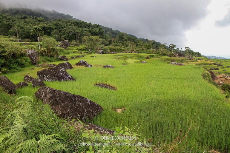 The gray of the sky which announces the downpour makes even more the fluorescent green of the young shoots of rice. (Toraja Country, Sulawesi, Indonesia, July 2010)