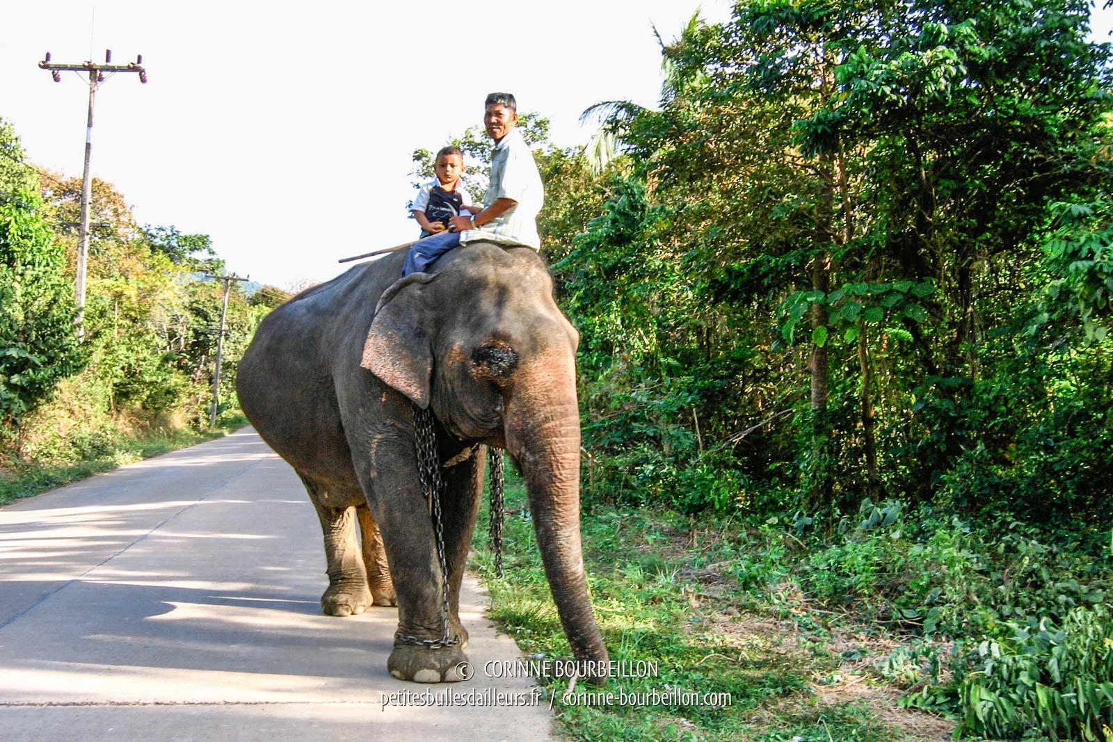 Éléphant croisé sur la route à Koh Lanta. (Thaïlande, janvier 2007)