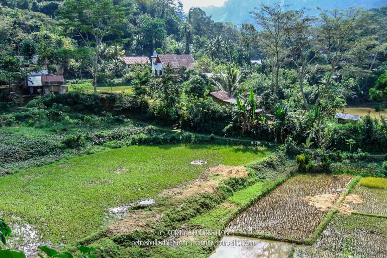 Le paisible village de Lemo, au milieu des rizières. (Pays Toraja, Sulawesi. Juillet 2007)