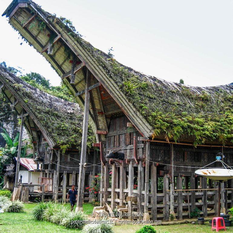 Plusieurs maisons traditionnelles avec toit tongkonan étaient pourvues d'une grosse antenne parabolique... (Pays Toraja, Sulawesi. Juillet 2007)
