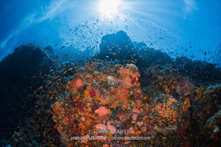 Le sommet du récif de Buffalo Rock, à contre-jour. (Komodo, Indonésie, juillet 2018)