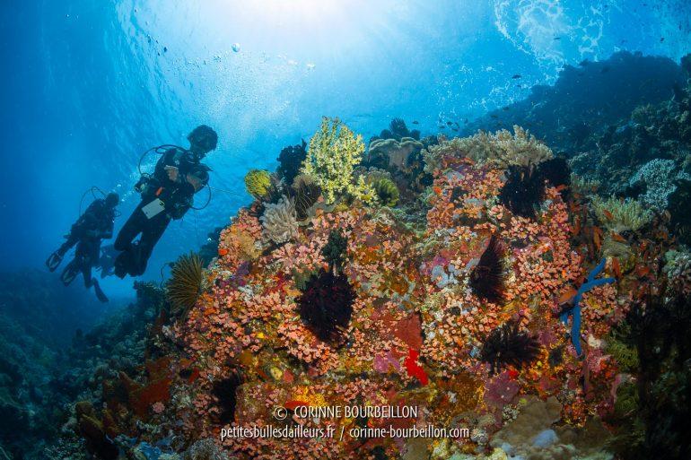 Balade dérivante le long du récif de High Voltage. (Gili Banta, Komodo Ouest, Indonésie, juillet 2018)