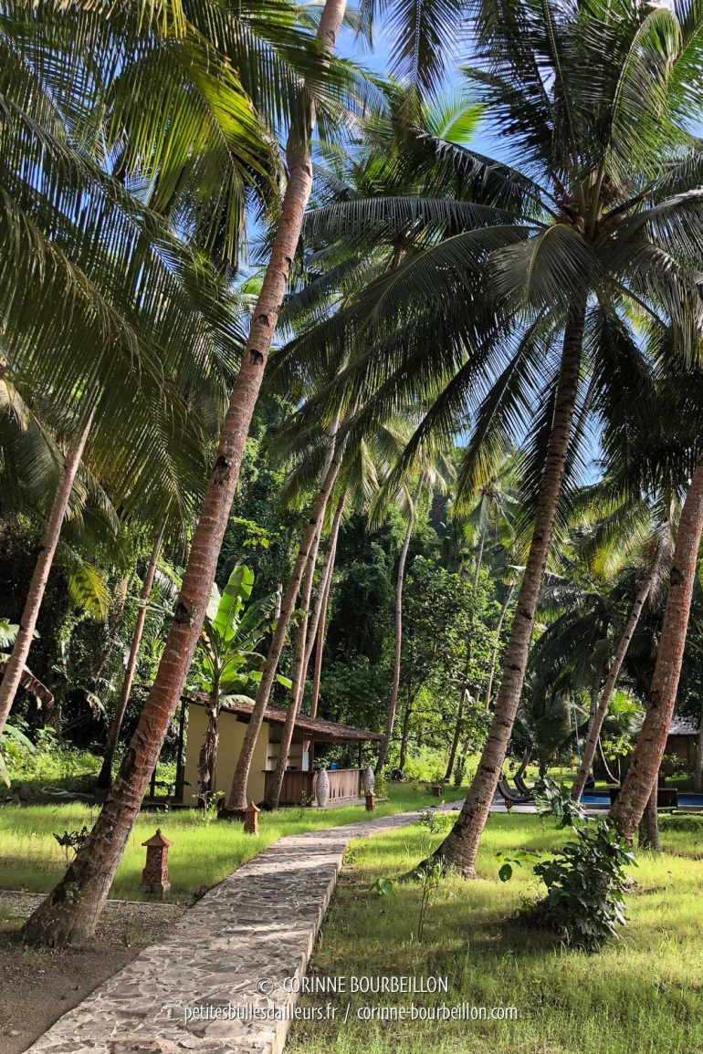 The beautiful garden shaded by the coconut trees of Sali Bay Resort. (Sali Kecil, Halmahera, Indonesia, July 2018)