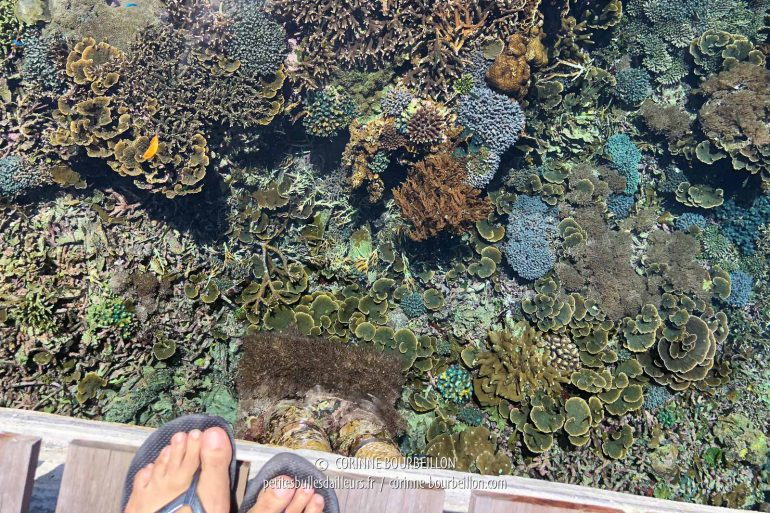 The coral at water level, under the pontoon, at low tide. Between two dives ... (Sali Bay Resort, Halmahera, Indonesia, July 2018)