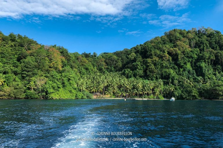 The small coconut grove that houses the Sali Bay Resort, seen from the sea. (Halmahera, Indonesia, July 2018)