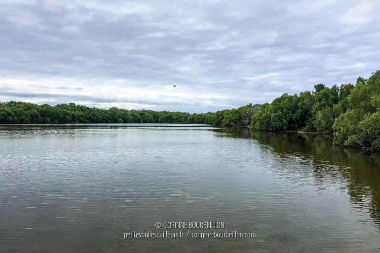 Sous le ciel gris, le lac et sa mangrove ont une allure un peu mélancolique. (Cabilao, Philippines, février 2019)