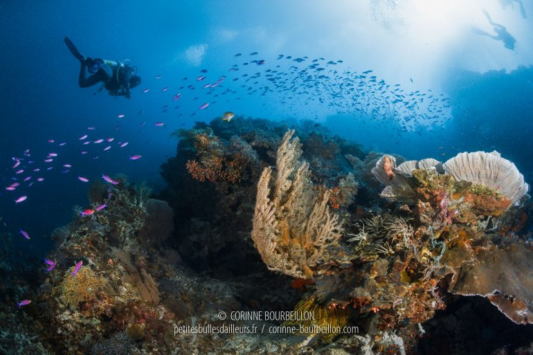 Drifting along the reef. (Cabilao, Philippines, February 2019)
