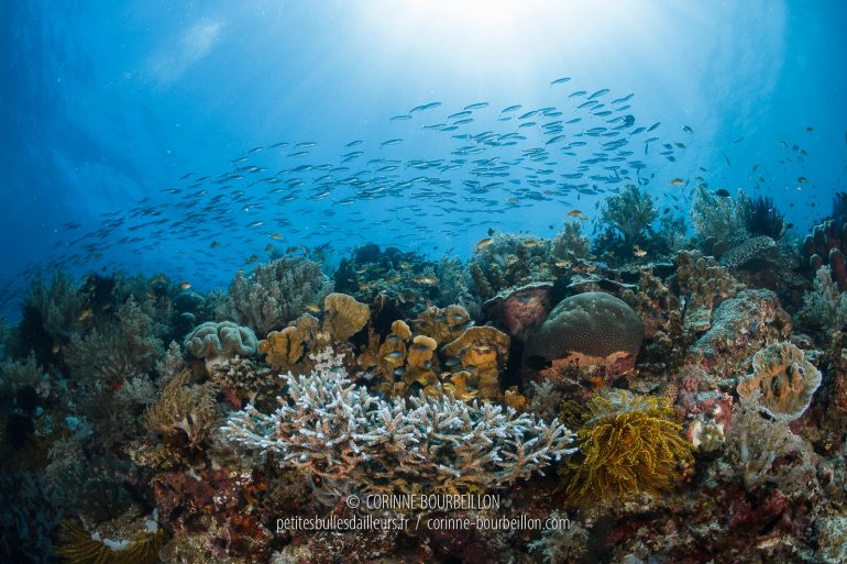 Atmosphere at the top of the reef. (Cabilao, Philippines, February 2019)
