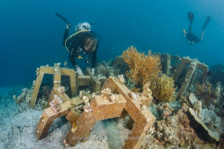 Marine biologist Thomas Pavy, from the Sulubaaï Foundation, inspects the coral cuttings attached to the SRP modules. (Philippines, February 2018)