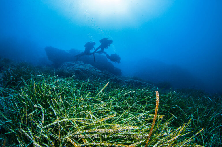 C' is the first time I have seen with my own eyes the famous Mediterranean posidonia. C'is a plant, not an algae. It is fragile and threatened by the anchors of boats that do not respect the anchorages. (Port-Cros, Hyères, France, July 2014)
