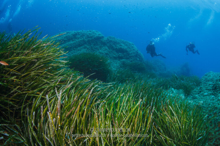 Divers release their bubbles above the expanse of posidonia. (Port-Cros, Hyères, France, July 2014)