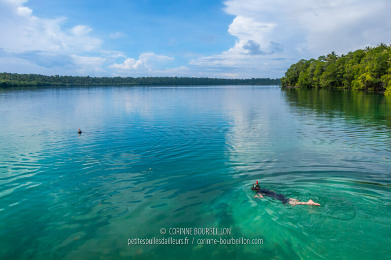 The water of the jellyfish lake of Kakaban has a beautiful jade green colour, which is an invitation to swim. (Borneo, Indonesia, July 2013)