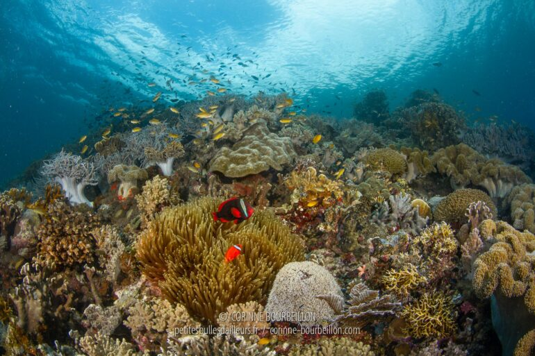 Napantao Reef is a marine protected area, and it shows! (Sogod Bay, Leyte, Philippines, March 2020)