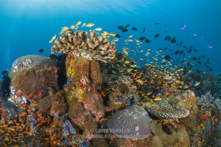 It's a bit of a rush in Sogod Bay! The coral reefs are real fish-bearing buildings... (Leyte, Philippines, March 2020)