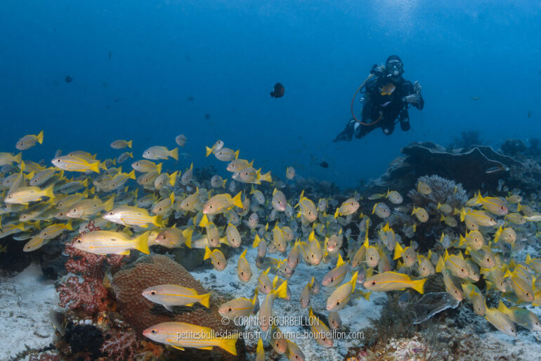 My friend Julia is posing above a school of yellowtail snappers, which are numerous in the waters of Mioskon. (Raja Ampat, Indonesia, July 2012)