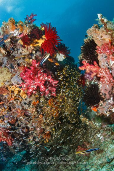 The reefs of Raja Ampat are home to a profusion of life. (Mioskon, Raja Ampat, Indonesia, July 2012)
