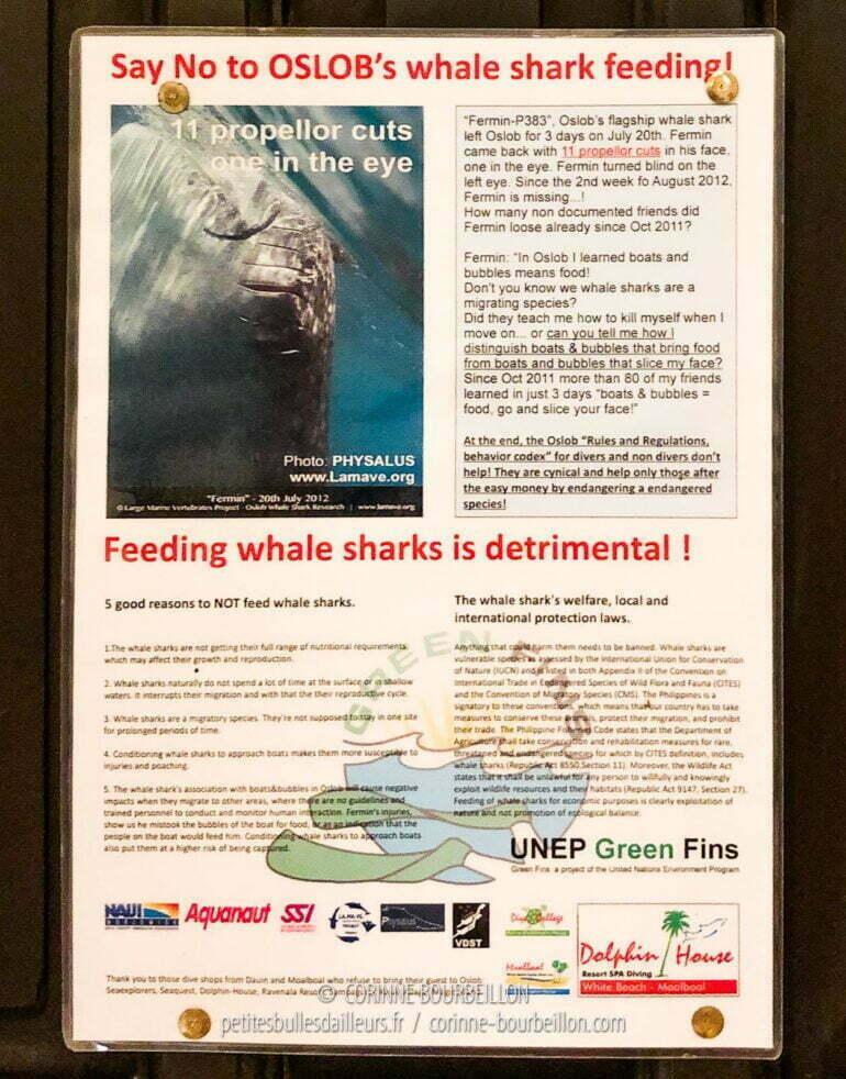 """""""Dites non au nourrissage des requins-baleines d'Oslob!"""" Cette affichette est placardée dans toutes les chambres du resort Dolphin House à Moalboal, sur Cebu, où j'irai passer quelques jours ensuite, après mon séjour à Leyte. (Philippines, mars2020)"""